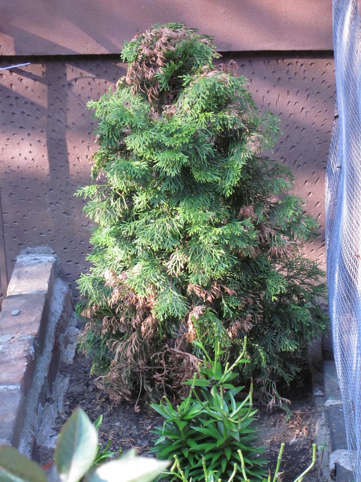 Xmas Tree In July
