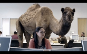 Happy Hump Day from Geico.