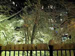Trees outside the 72nd Street subway station: look don't touch.