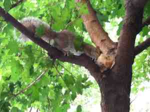 It's a good day to be a scone-loving squirrel.