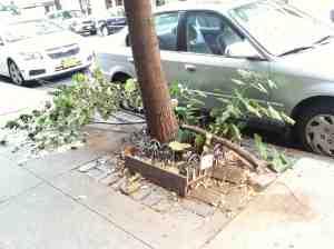 Lucky fallen tree branch.