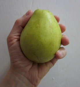 The pear that started my agony.