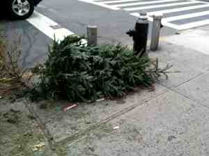 Asshat New Yorker-style Christmas tree disposal.